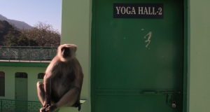 Monkey waiting for class to start...