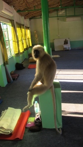 Monkeys inside the shala (normally unacceptable but they got in anyway) hahaaa.