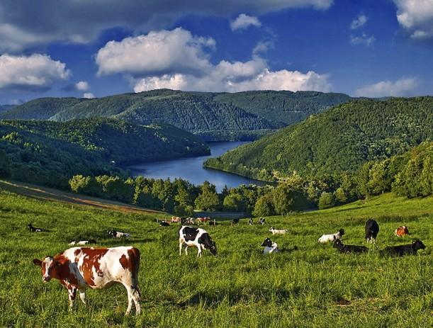 einruhr_..happy_cows..