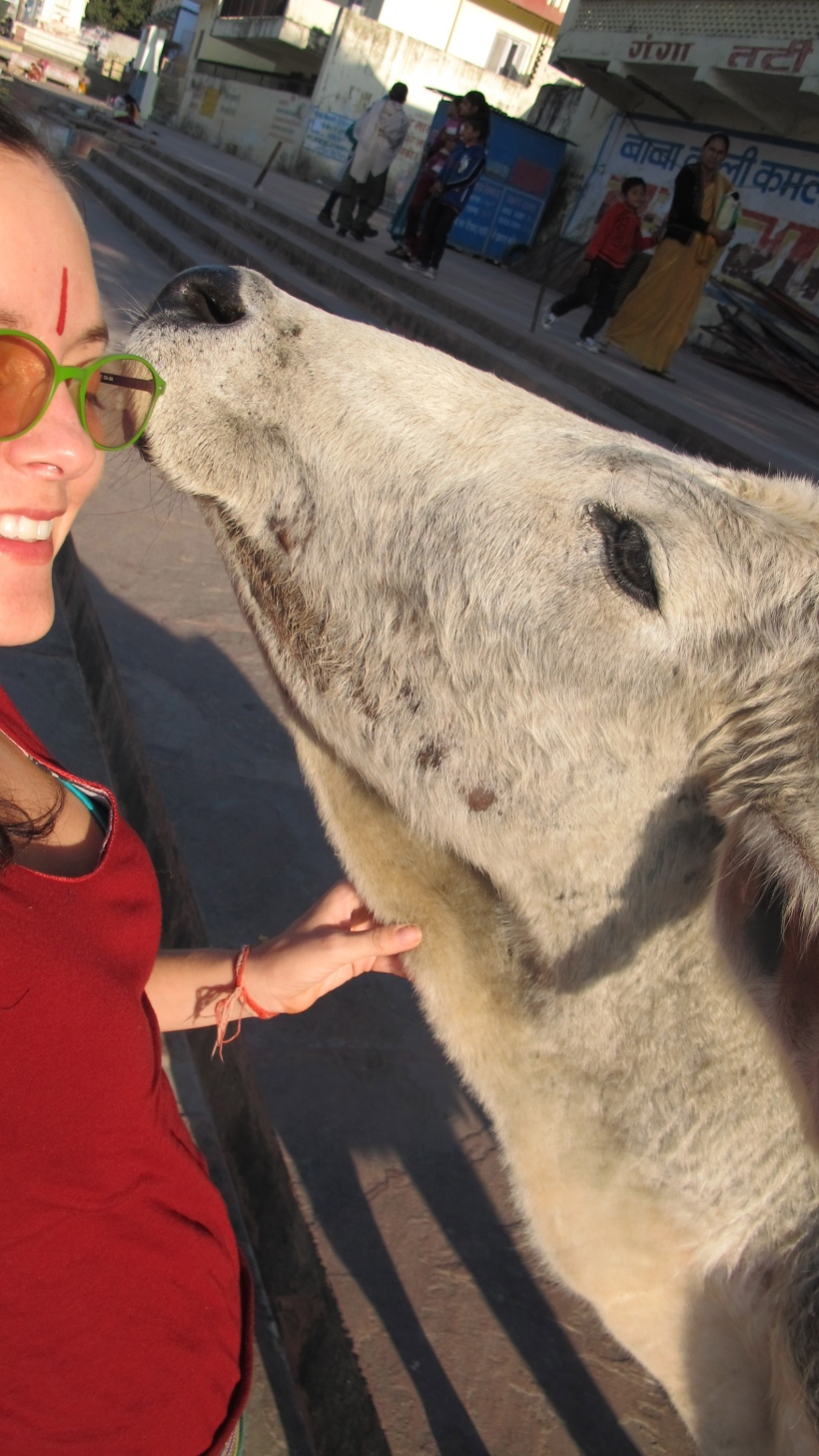 Kissed by a cow in Rishikesh.